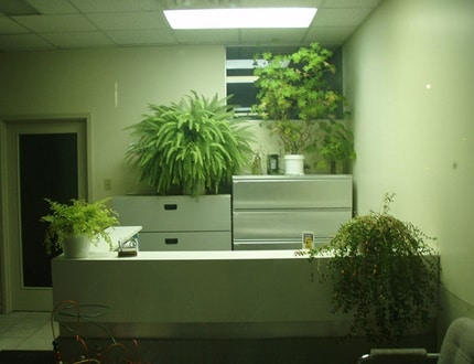 A clean and green workplace
