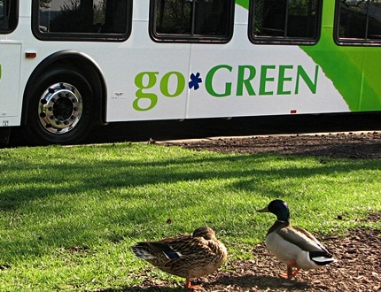 Go green word painted on the bus
