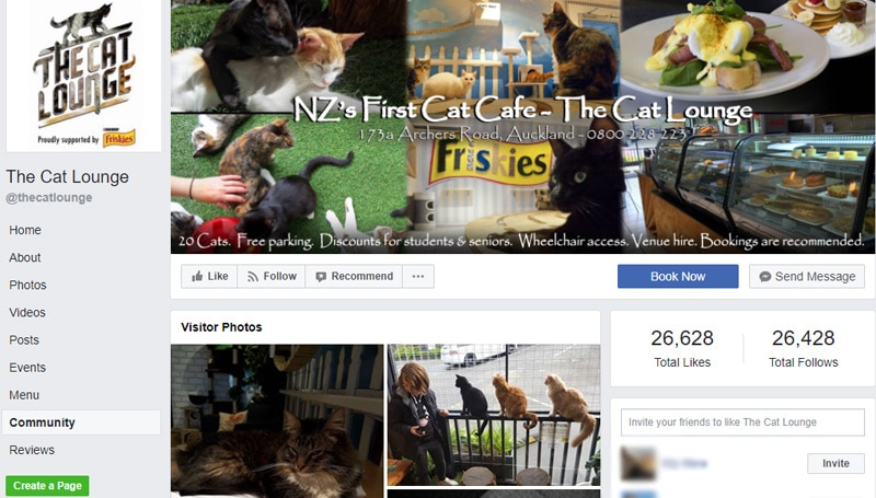 the cat lounge facebook page