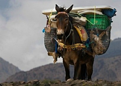 A donkey carrying heavy loads
