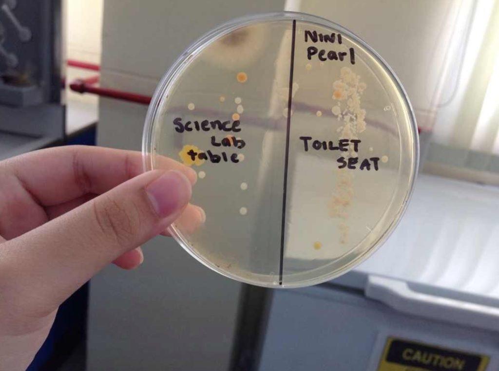bacteria in toilet seat